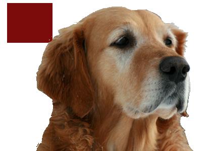 Nutritional Information for Dog Food